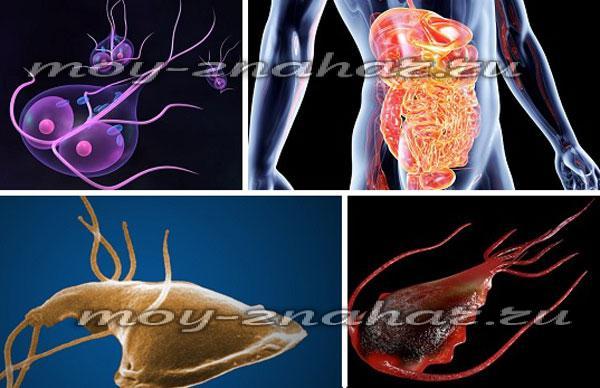 амебы паразиты человека