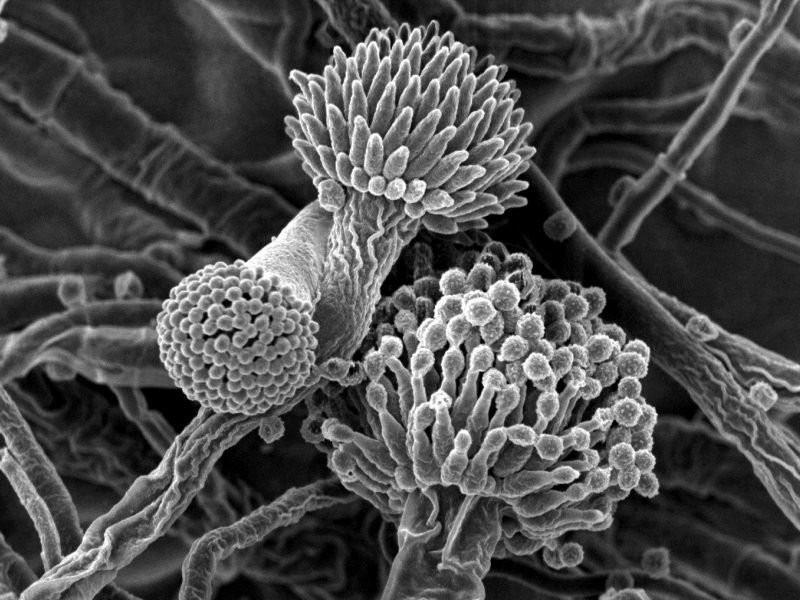 Как лечить плесневый грибок в организме