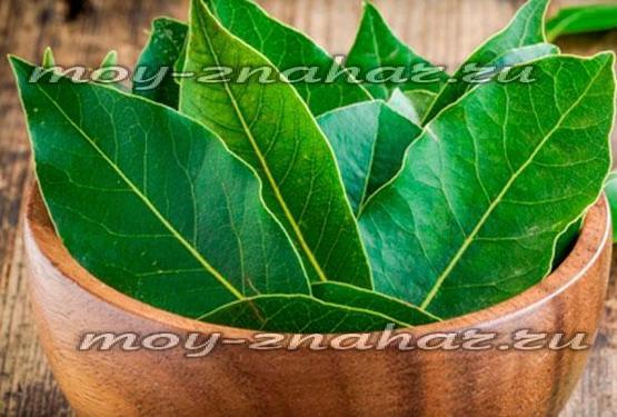 Очищение суставов лавровым листом: отзывы