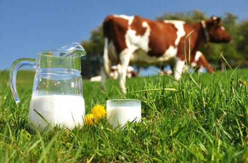 Молоко опасно для здоровья?